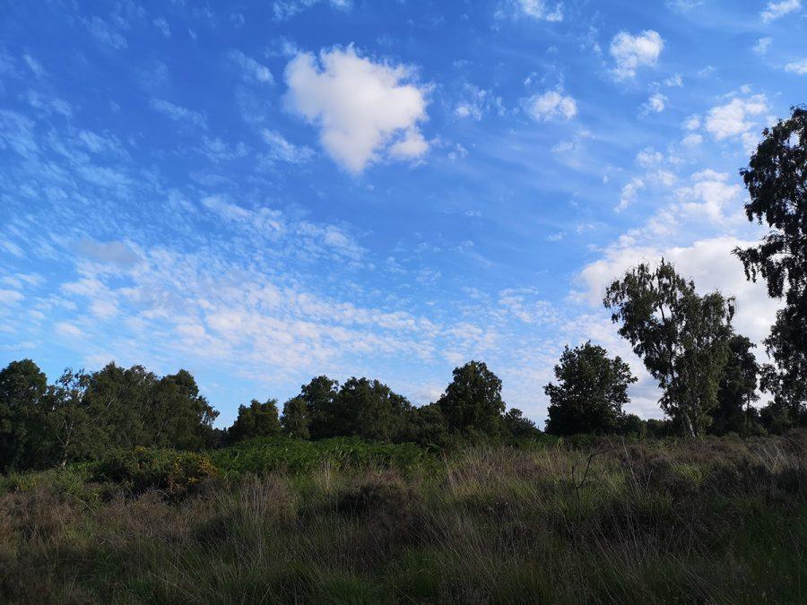 Typical cuckoo habitat on Cannock Chase