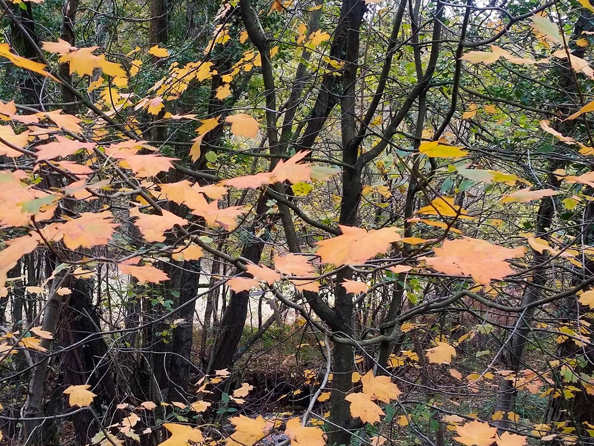 in the sticks - Autumn Colours in Wyre Forest