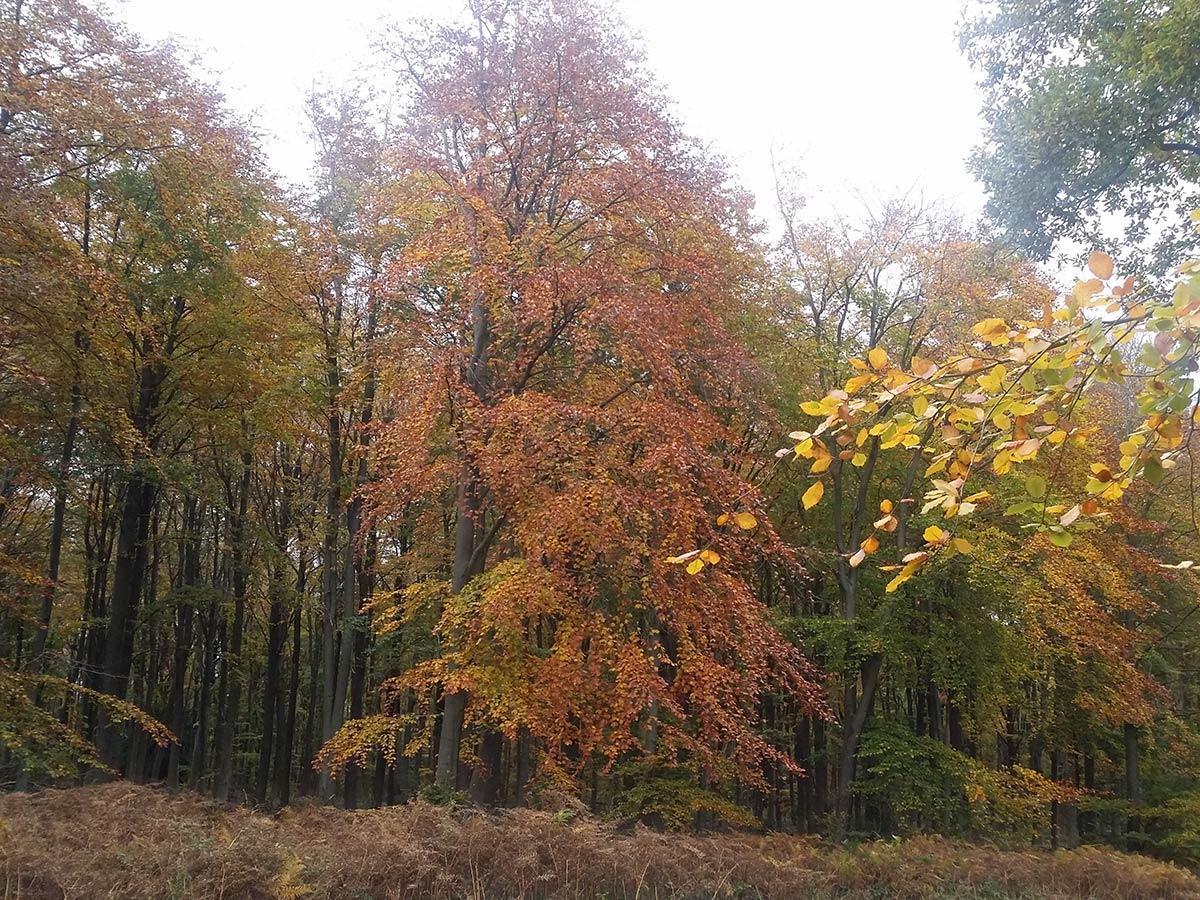 Autumn Colours Forestry in Wyre Forest