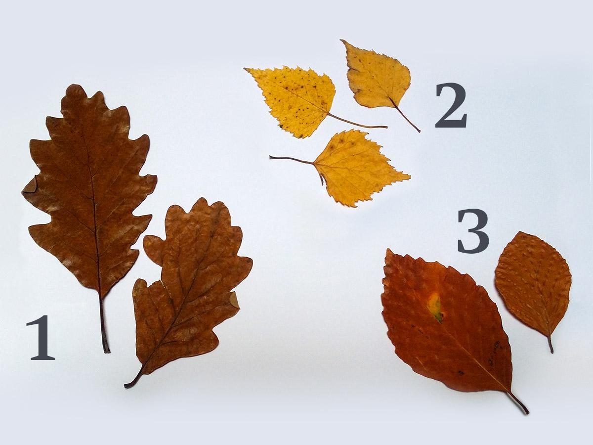 Autumn Leaf Quiz