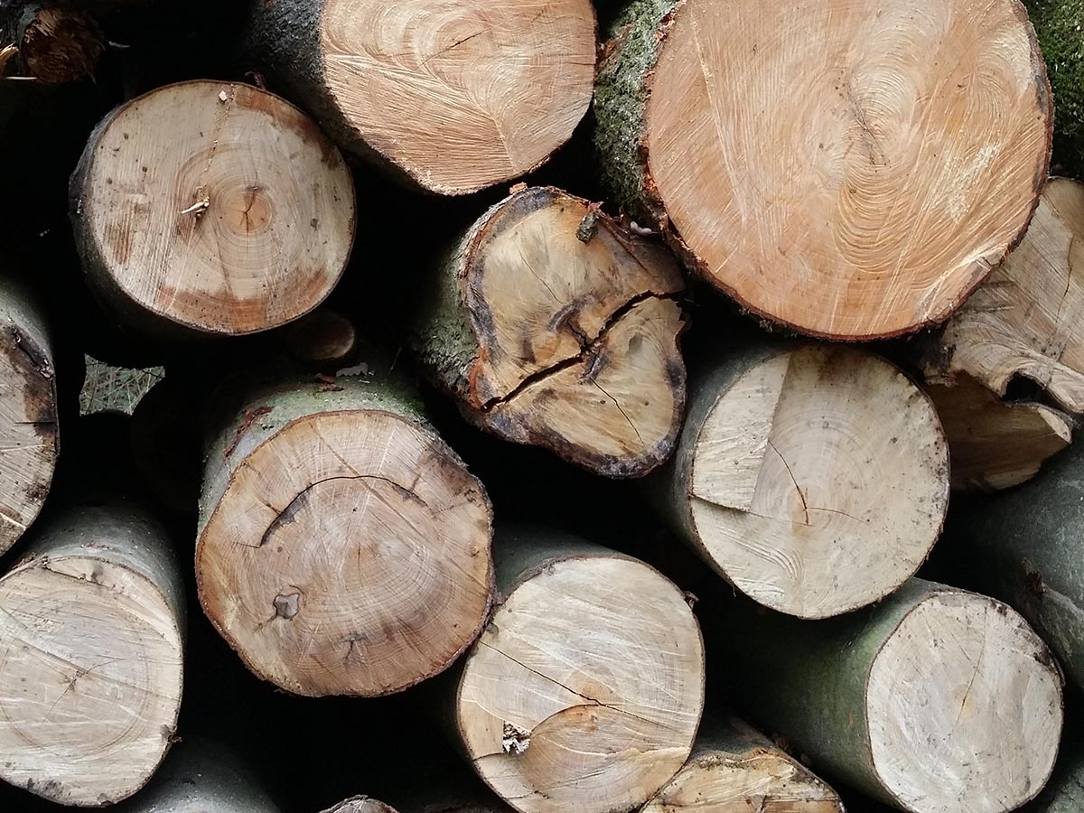 Beech Logs Wyre Forest