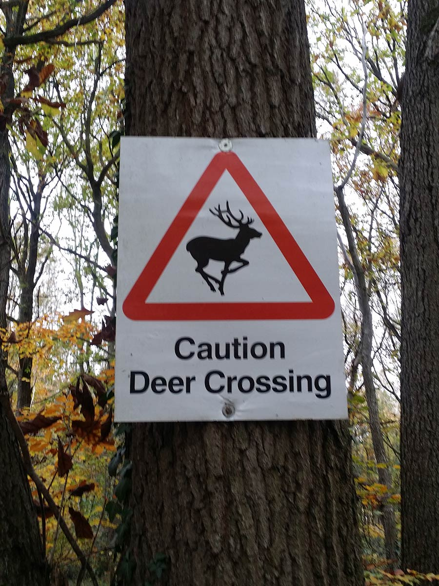 Caution Deer Crossing Wyre Forest