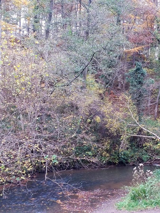 Dowles Brook Wyre Forest