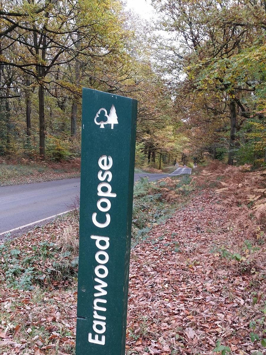 Earnwood Copse
