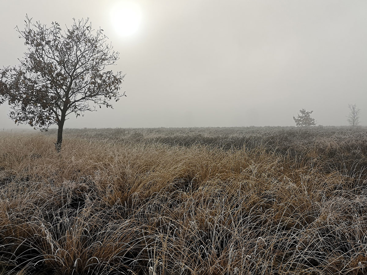 Foggy Heath in winter time.