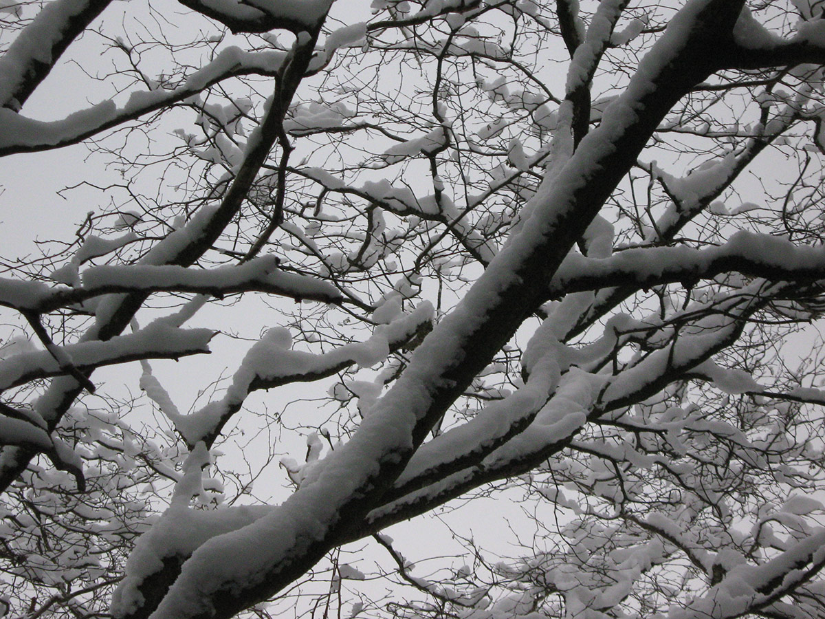 Winter Snow on the trees