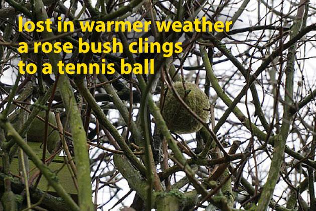 Tennis Ball Poem - Offas Press